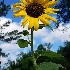 © Judy Rae PhotoID# 15530241: Reaching For The Sun